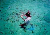 Snorkeling a Phi Phi Island