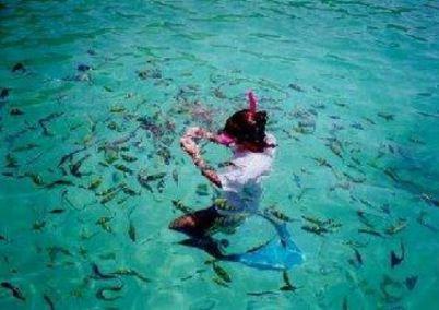 Snorkeling a Phi Phi Island