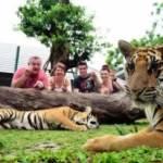 Phuket Tiger Kingdom - Small Tigers