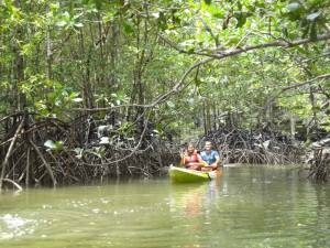 Krabi Tours Kayaking