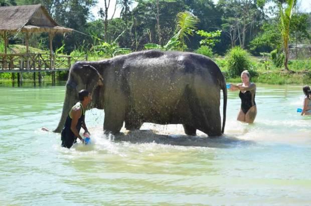 Elephant Sanctuary Phuket bathing