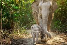 Elephant Sanctuary Phuket - Baby Elephant