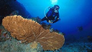 Krabi Activities - Krabi Scuba Diving