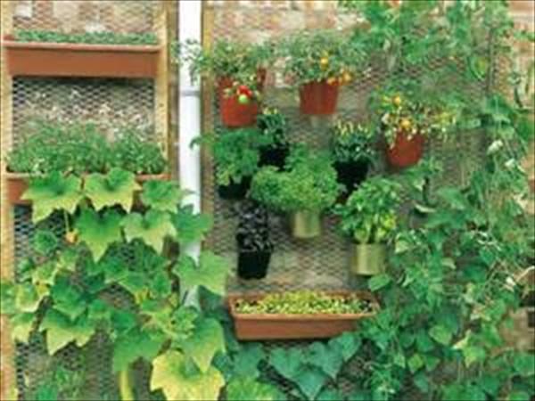 Simple Vegetable Gardening Plans