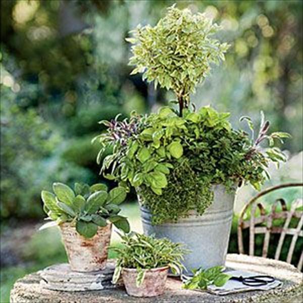 DIY unique gardening ideas