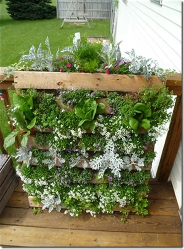 DIY easy wooden pallet vertical garden