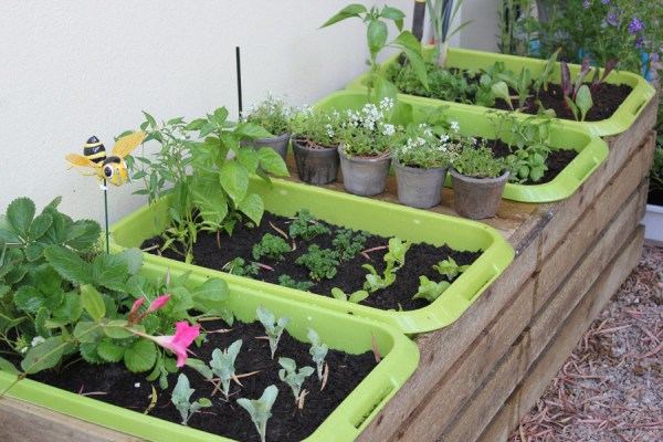 how to cultivate vegetable at home