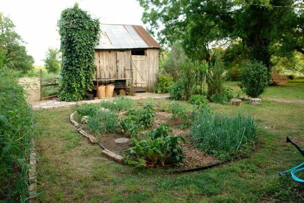 Easy home gardening tips