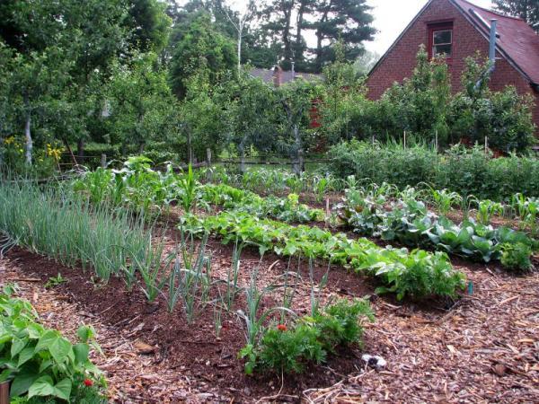 Easy vegetable gardening tips