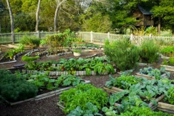 indoor vegetable gardening
