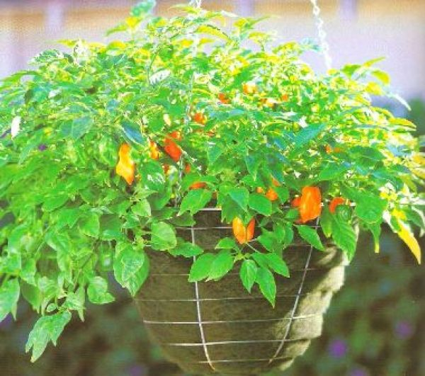 DIY backyard gardens