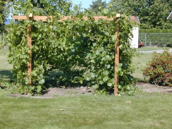 DIY Vegetable gardening tips