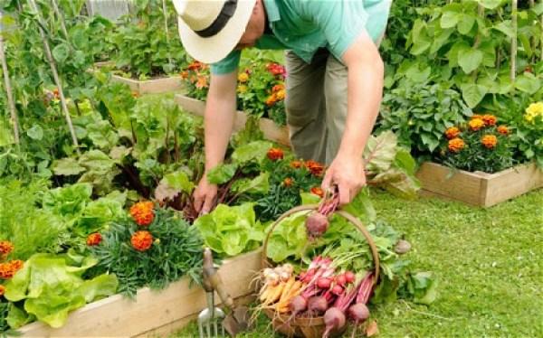 DIY Home gardens