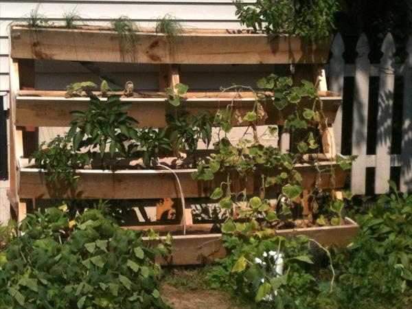 learn easy home gardening tips