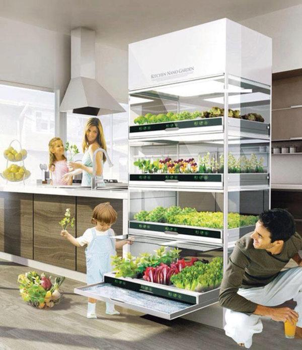modern kitchen gardening ideas