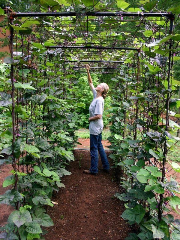 easy vegetable gardening ideas