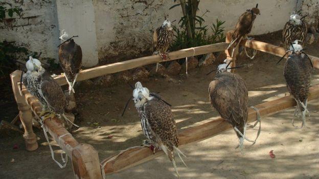 save wildlife save nature