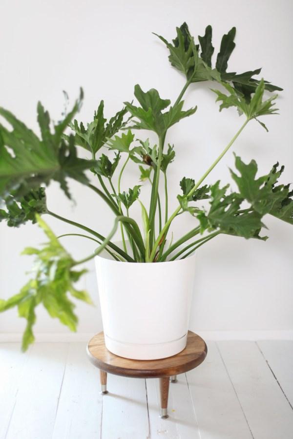 planters for indoor gardens