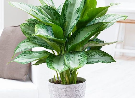 indoor diy mini planters