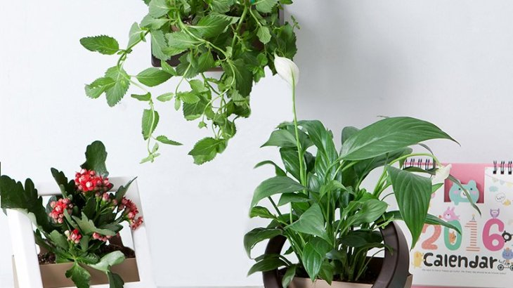 Best DIY vertical garden ideas
