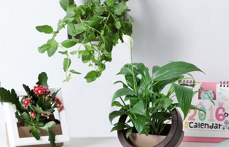 Best DIY vertical garden ideas