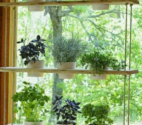 Inspiring mini home gardens