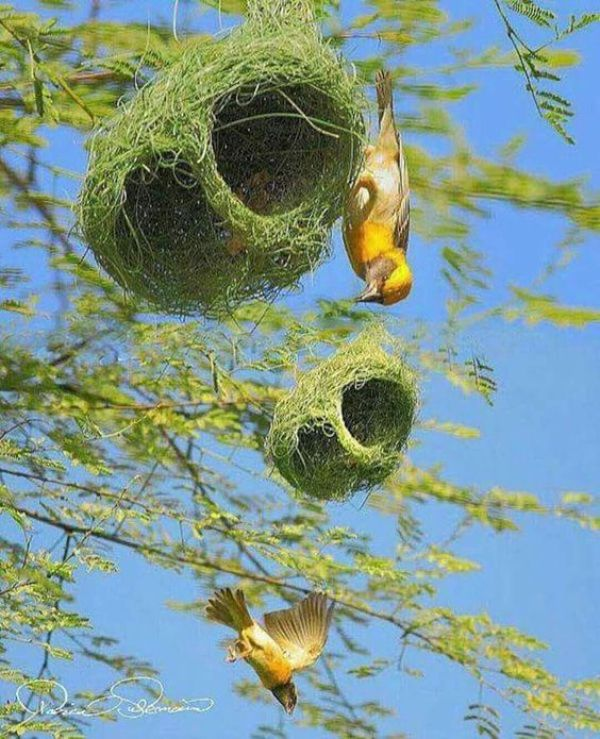 decorating with bird nests