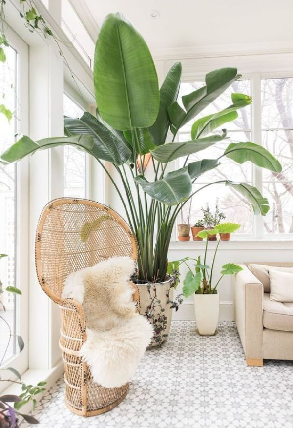 INDOOR PLANTERS IDEAS