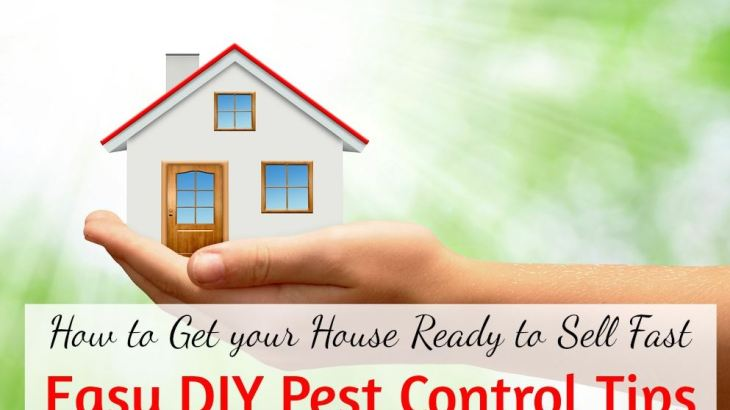 Do-it-yourself-pest-control-5