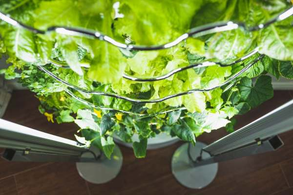 diy fruits and vegetable gardens
