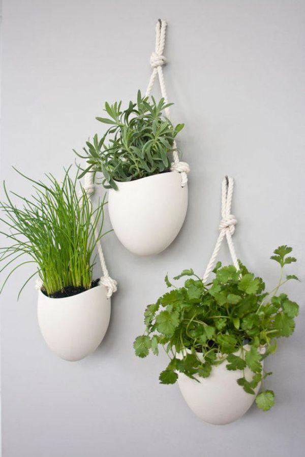 how to grow herbs indoor