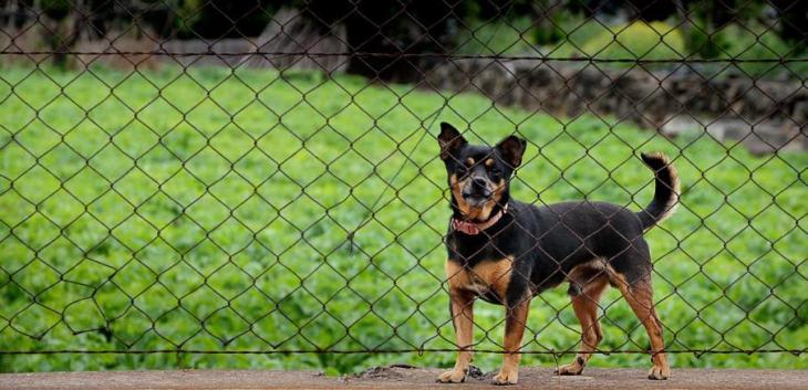 chain-link-dog-fence-ideas