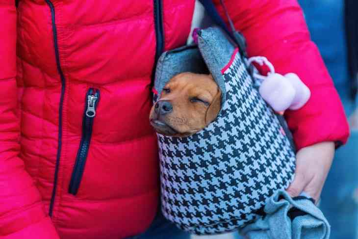 dog-carrier-sling