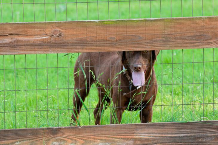 welded-wire-dog-fencing