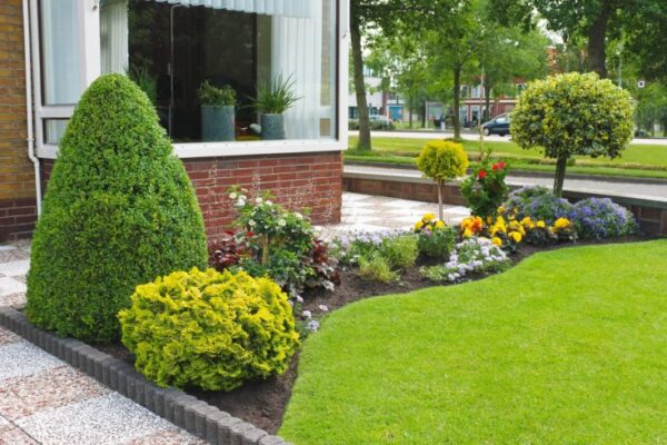 Well Trimmed Trees - Gardening idea