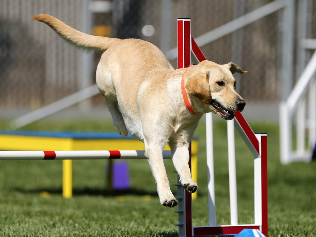 Adorable Agility Animal