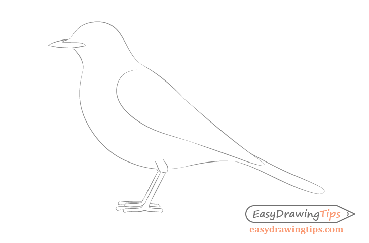 How To Draw A Bird Step By Step Side View Easydrawingtips