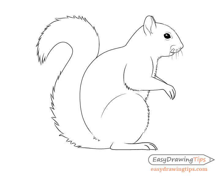 How to Draw a Squirrel From the Side View Tutorial