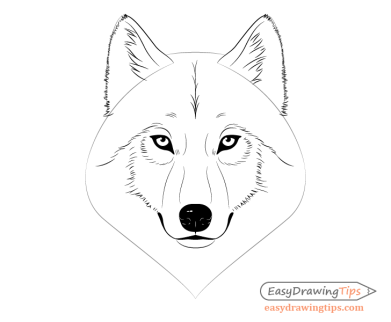 Wolf face ears drawing