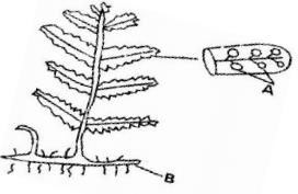 MOKASA Joint Evaluation Examination Biology Paper 1 2016