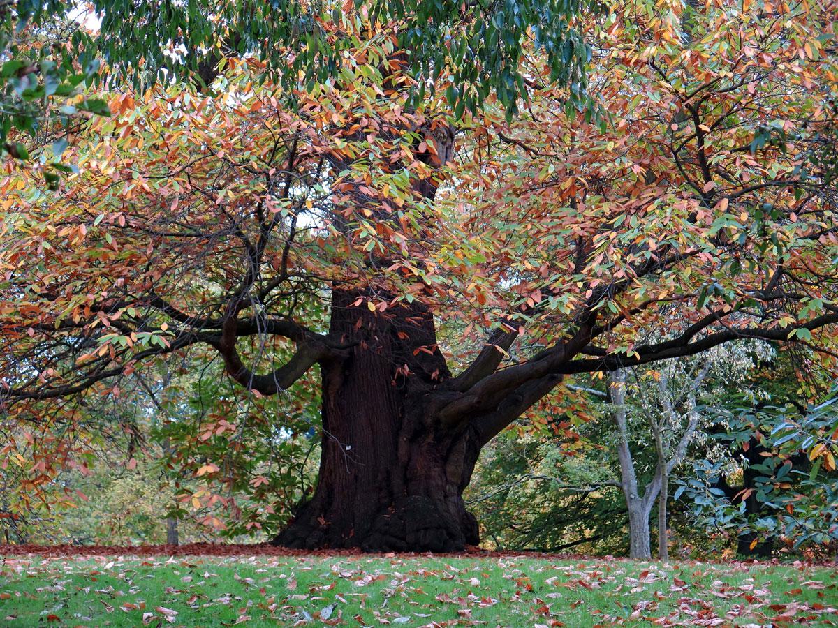 Autumntime