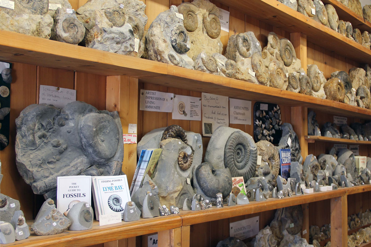 Fossils for sale in the Heritage Centre shop