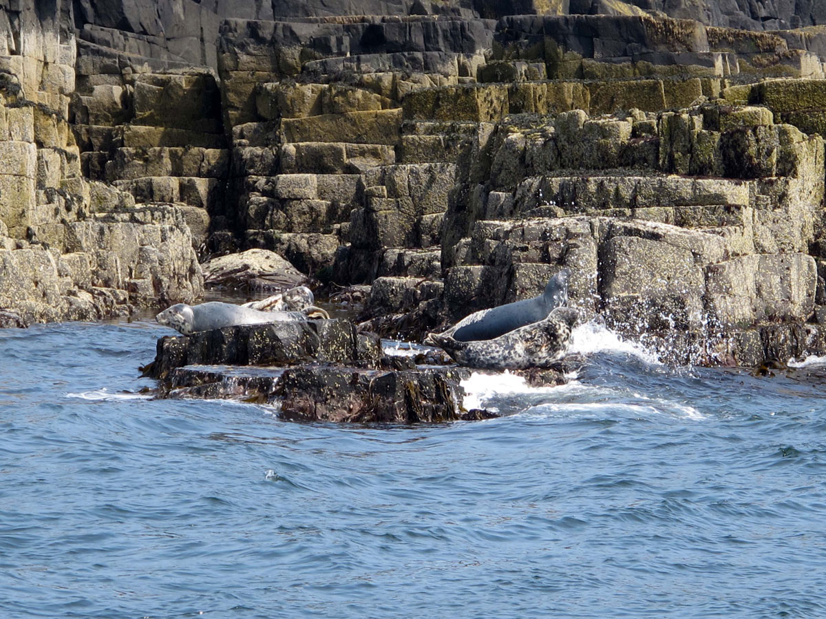 Seals at South Ness