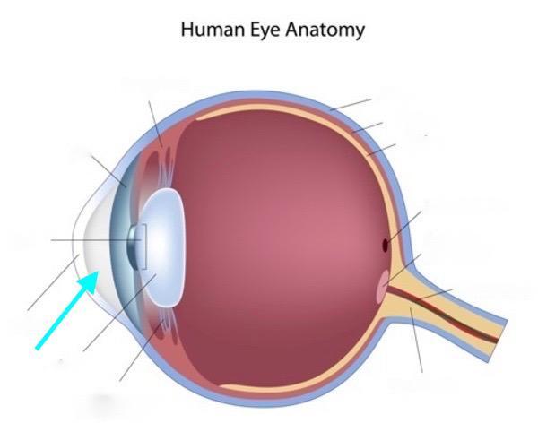 Human Eye Flashcards | Easy Notecards