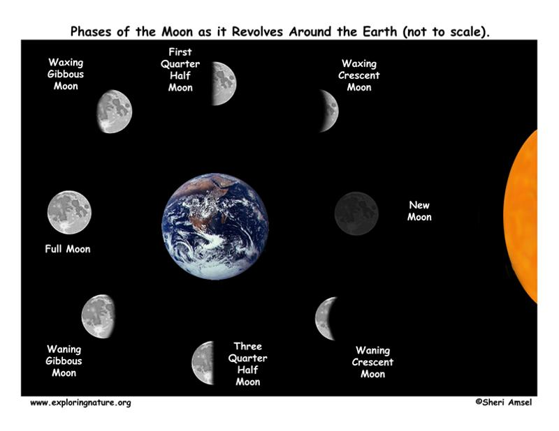 phases of the moon diagram to label 1994 ford bronco wiring print sun-moon-earth flashcards | easy notecards