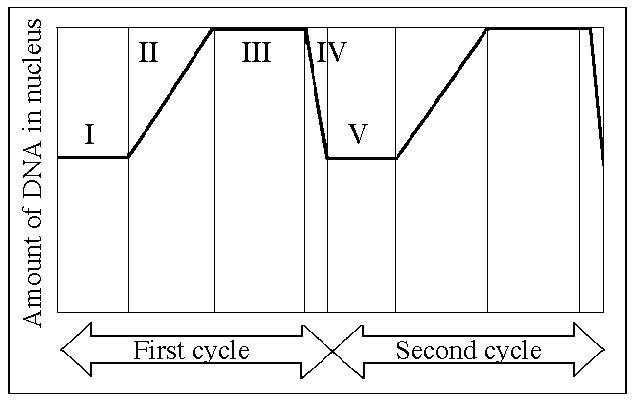 stages of meiosis diagram labeled esp ltd ec 50 wiring biology 2 quiz. flashcards | easy notecards