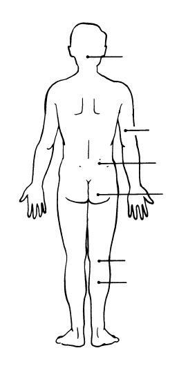 Print Exercise 1: The Language of Anatomy flashcards