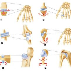 Bones Human Skeleton Diagram Land Cruiser Headlight Wiring A&p Exam 3 Flashcards | Easy Notecards