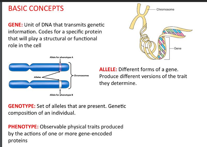 USC bridge Nurs 500 3.3 Chromosomes and Genetics ...