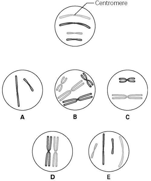 Biology Comprehensive Test Preparation Chapter 1-12 & 16
